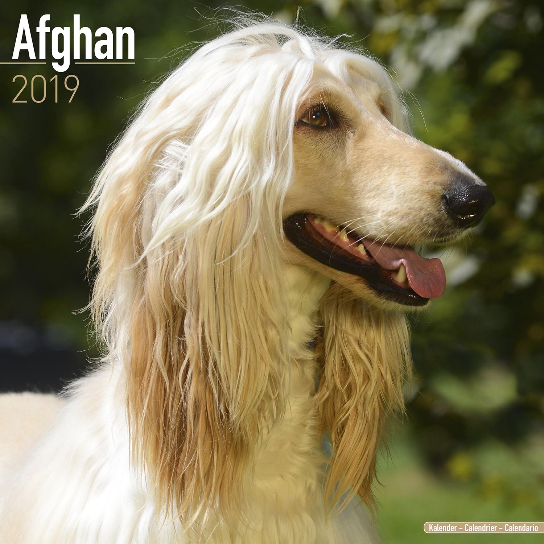 Calendario 2019 Ritmica Más Recientes Afghan Calendar 2019 Afghan Dog Breed Calendar Afghans Premium