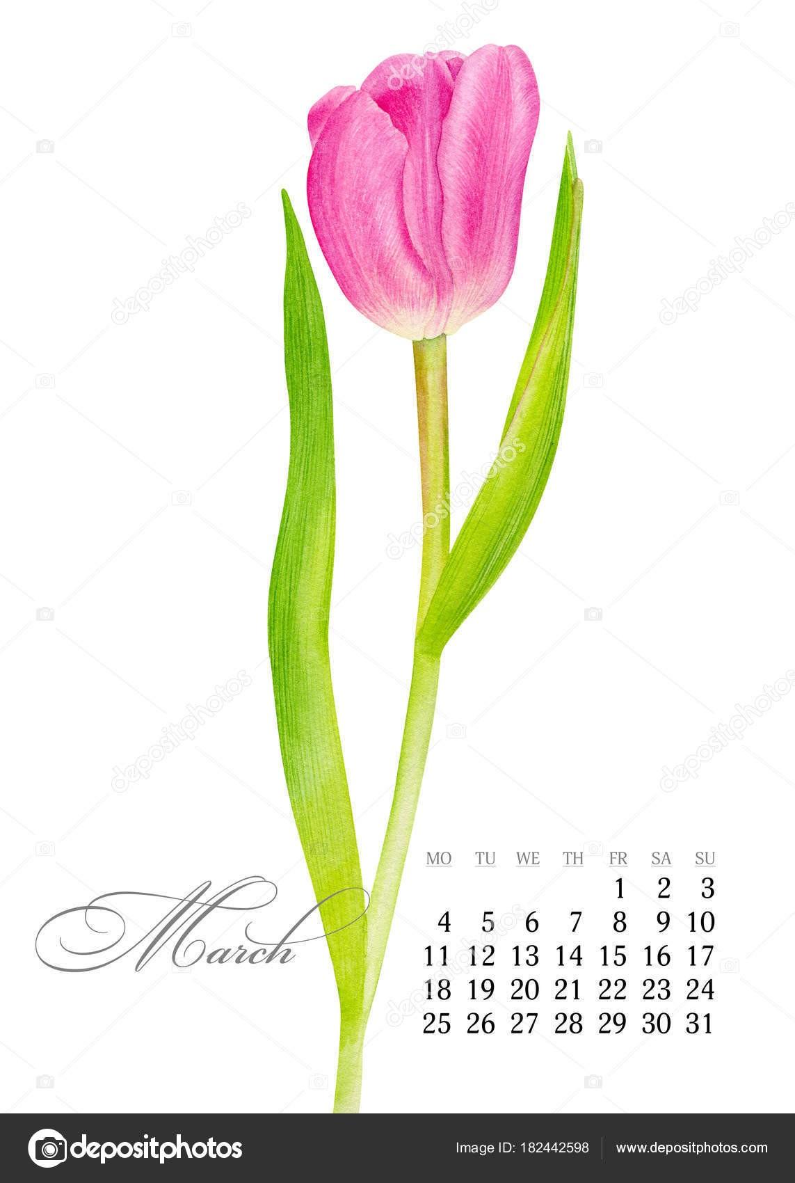 Calendário para impress£o elegante 2019 Mar§o Aquarela rosa Tulip Arte bot¢nica Modelo