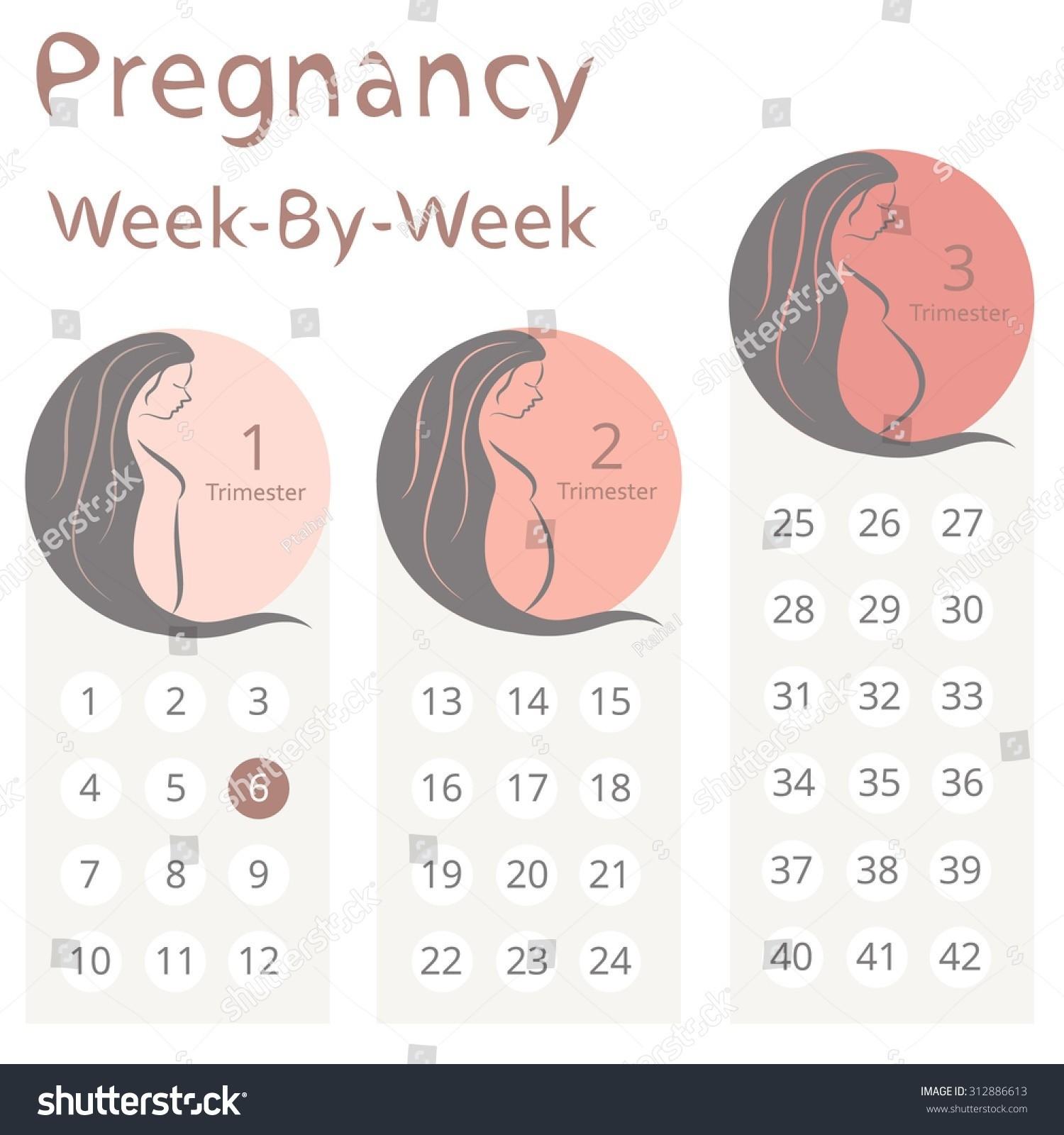 2019 Calendar with Week Numbers Excel Más Recientemente Liberado Weekly Pregnancy Calendar Week by Week Pregnancy Calendar