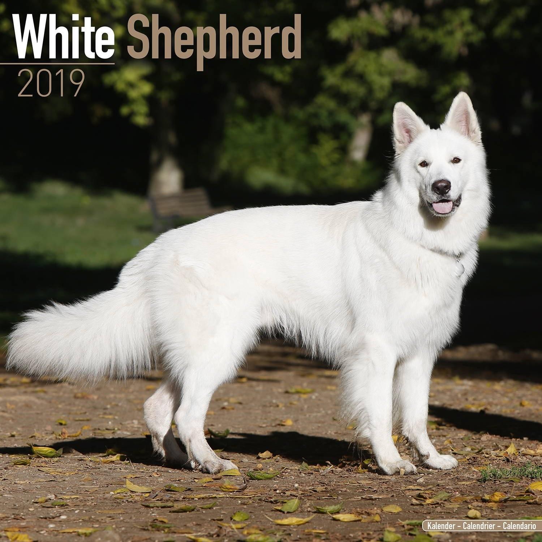 White shepherd calendar dog breed calendar wall calendar office products 1500x1500 Canadian shepherd dog