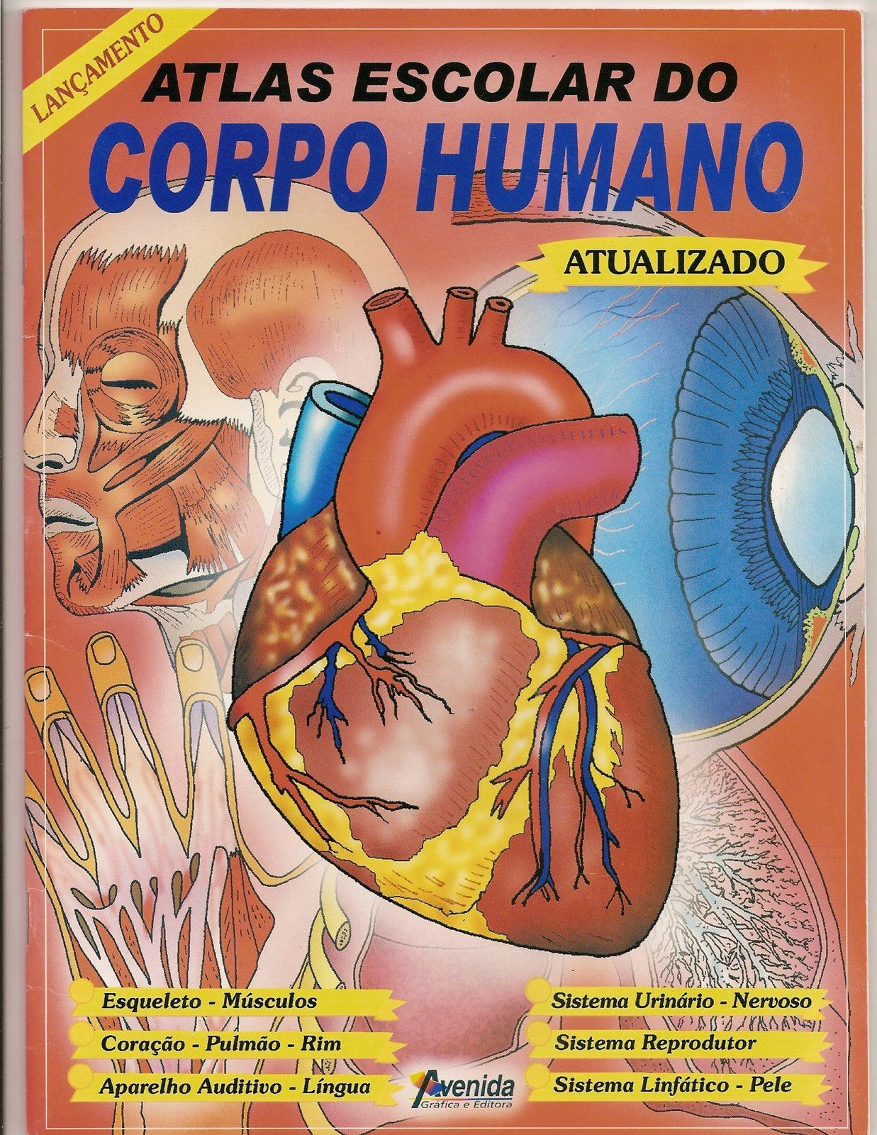 ajudinha básica corpo humano