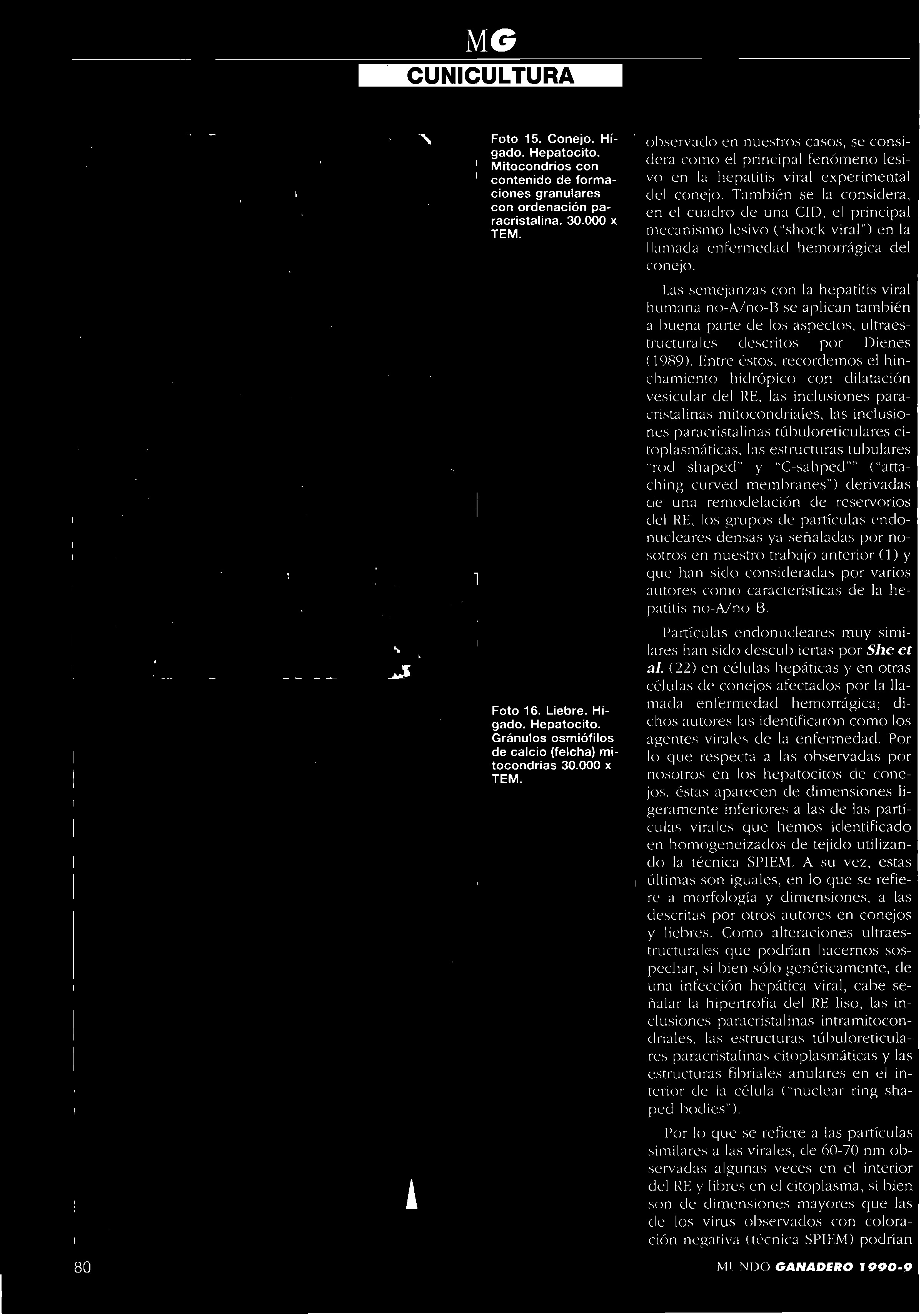 Calendario Lunar 2019 Chile Más Recientemente Liberado Mundoganadero Y R A±o 1