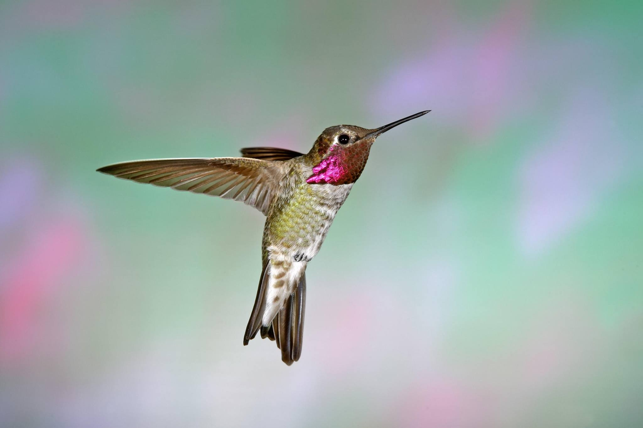 March 2019 Calendar Landscape Más Recientes Hummingbirds Landscape Matters 2019 Nassau County Extension Of March 2019 Calendar Landscape Más Recientemente Liberado December 2019 Calendar