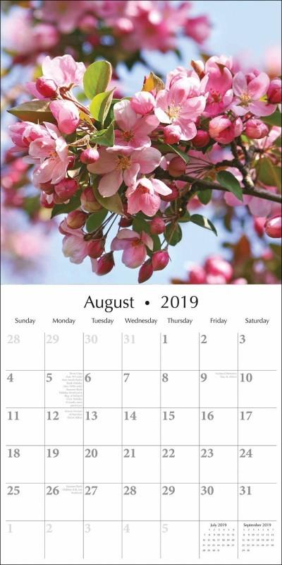 Calendario 2019 Para Imprimir Pterygium Pronunciation Más Recientemente Liberado Calendario 2019 Blossoms Bookshop
