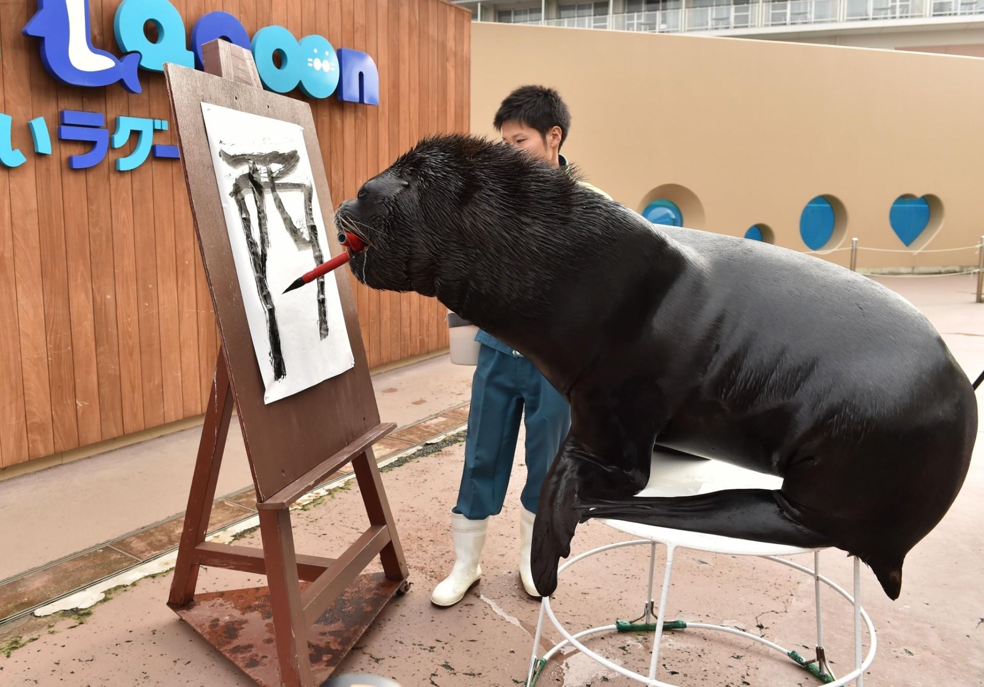 26dez2016 o leao marinho leo de 14 anos participa de uma sessao de treinamento de caligrafia para aprender a escrever galo no aquario hakkeijima sea paradise em yokohama toquio baseado no 1920x1342