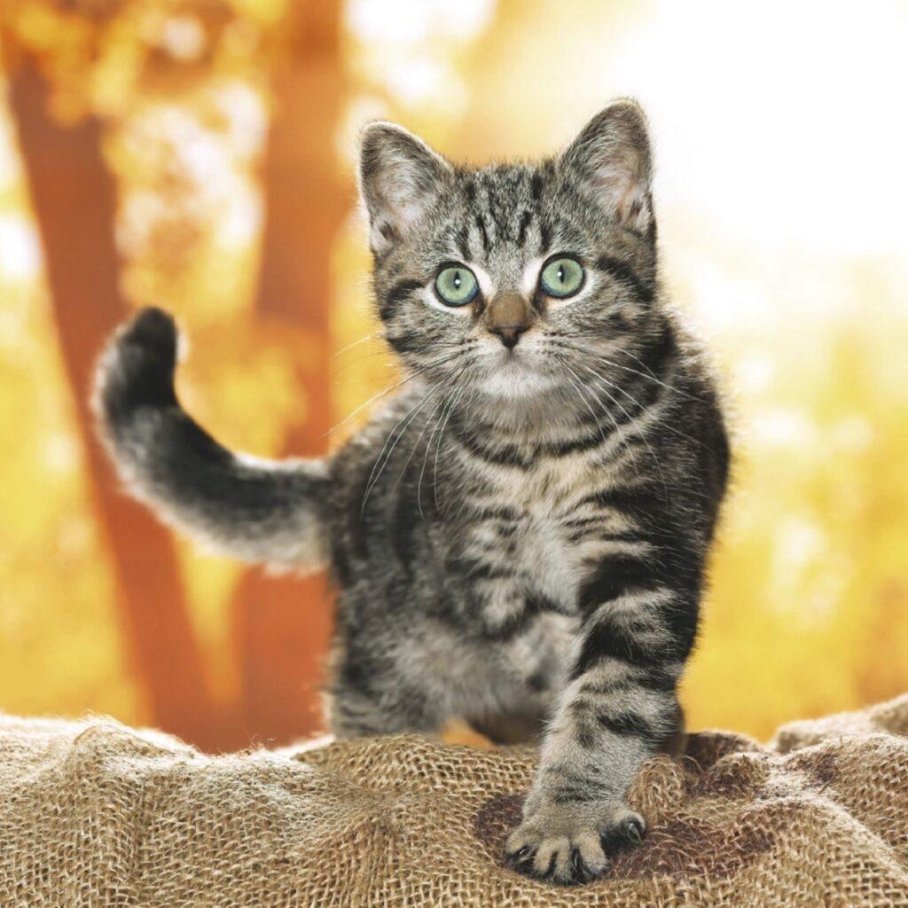 calendario gatos cats 2021