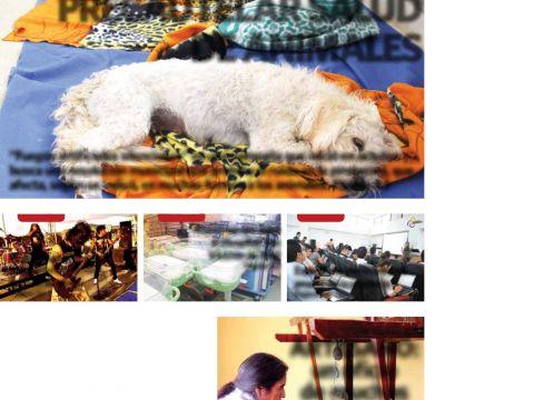 Calendario 2020 Con Feriados De Chile Más Recientes Imbabura 6 Noviembre 2015 [pdf Document]